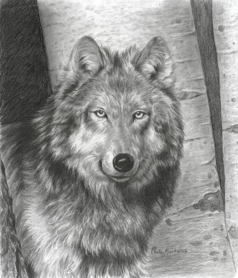 Wise Eyes Drawing  - Wise Eyes Fine Art Print