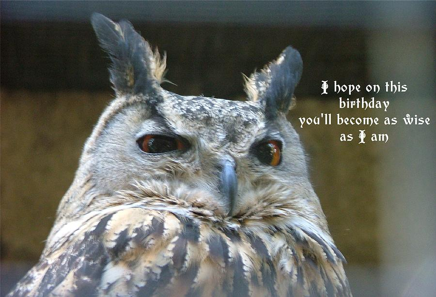 Wise owl pictures - photo#27