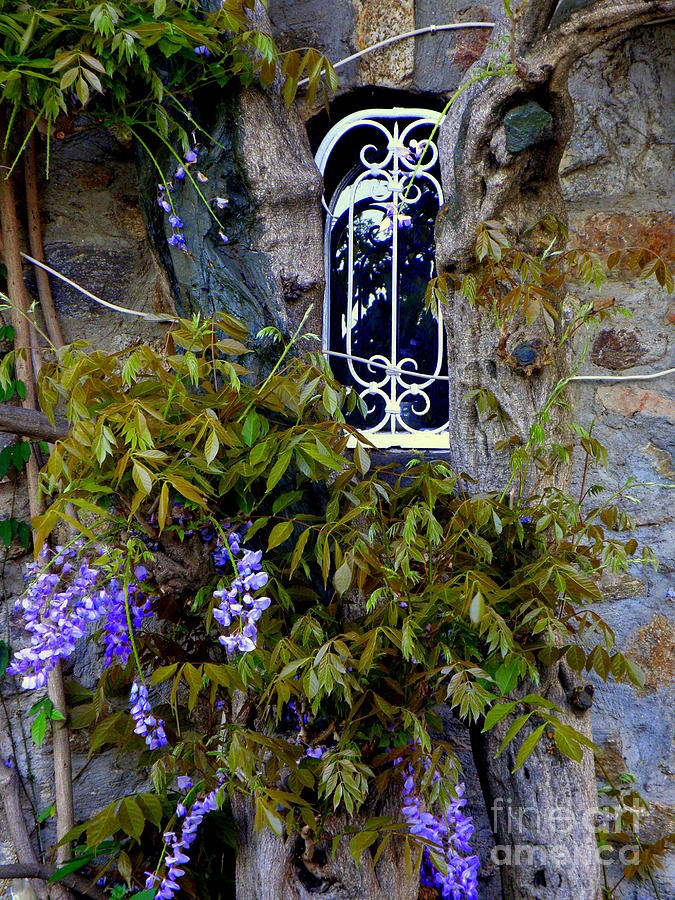 Wisteria Window Photograph