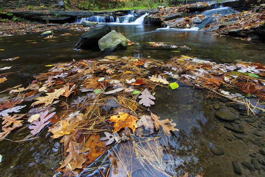 Wolf Creek Photograph