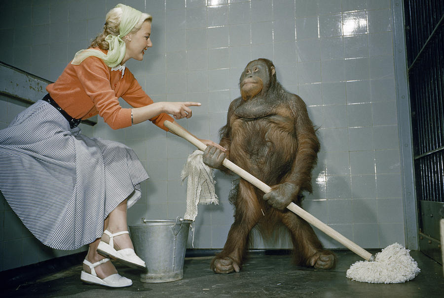 Color Image Photograph - Woman Communicates With Orangutan by B. A. Stewart And David S. Boyer