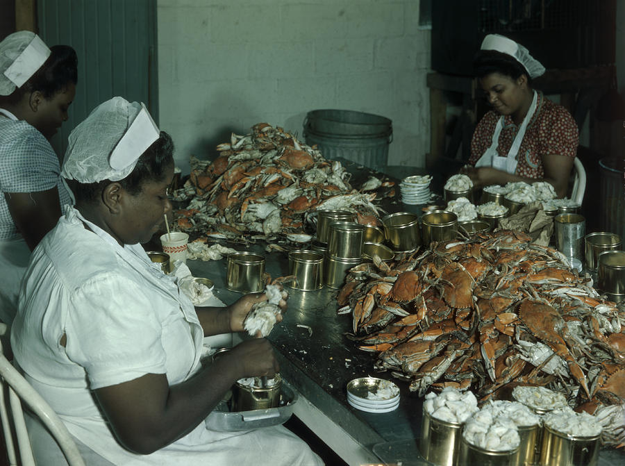 Women Pick And Pack Crab Meat Into Cans Photograph