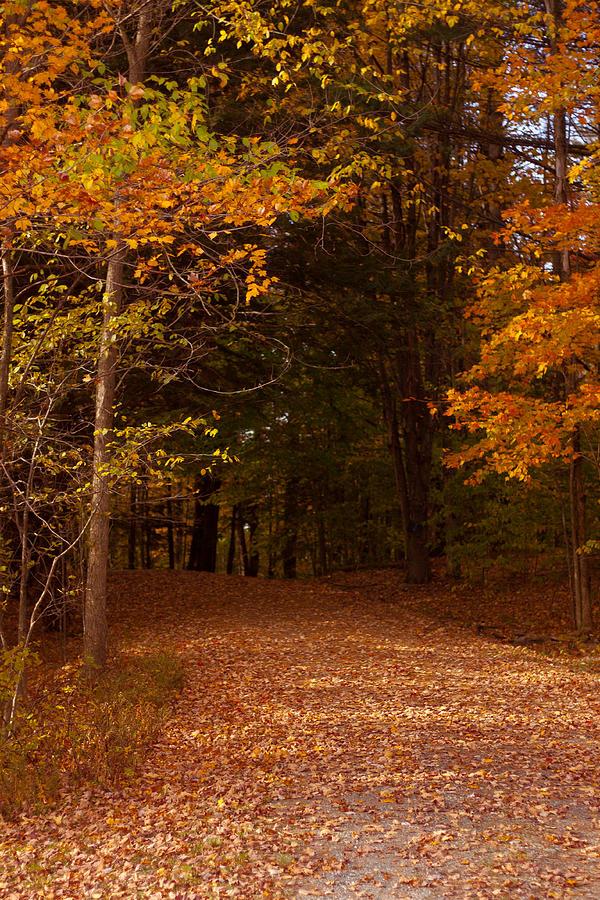Wonderful Fall Colors Photograph