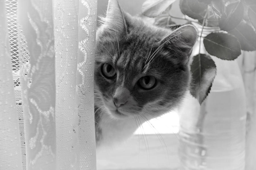Wondering. Kitty Time Photograph