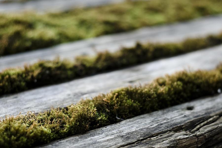 Wood And Vegetal Photograph