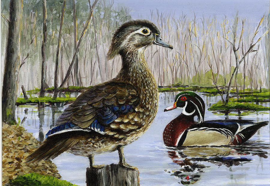 Wood Duck Painting  - Wood Duck Fine Art Print