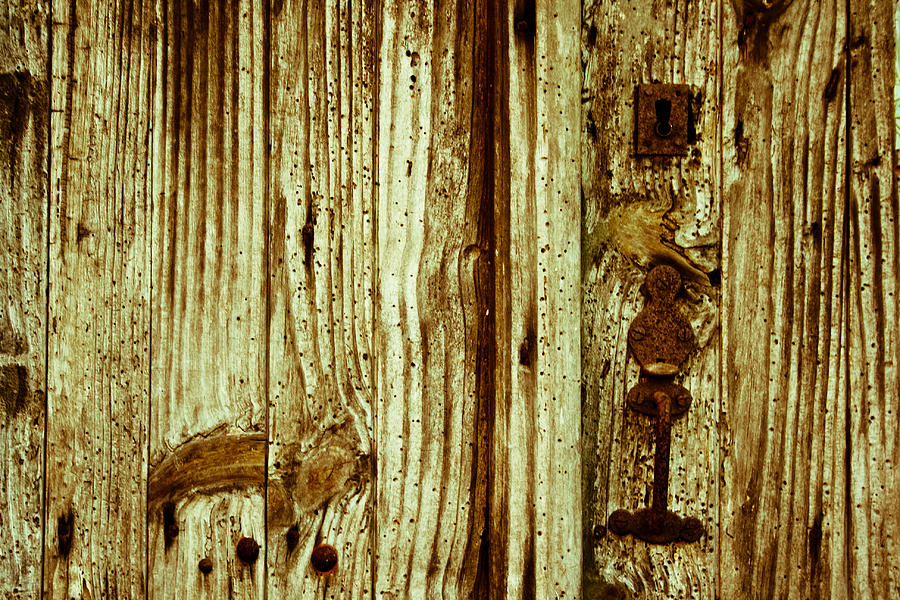 Wood Grain Photograph  - Wood Grain Fine Art Print