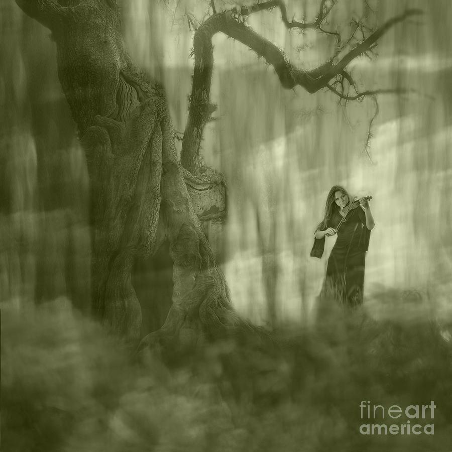 Wood Sonata Photograph - Wood Sonata by Witaliy Sapeka