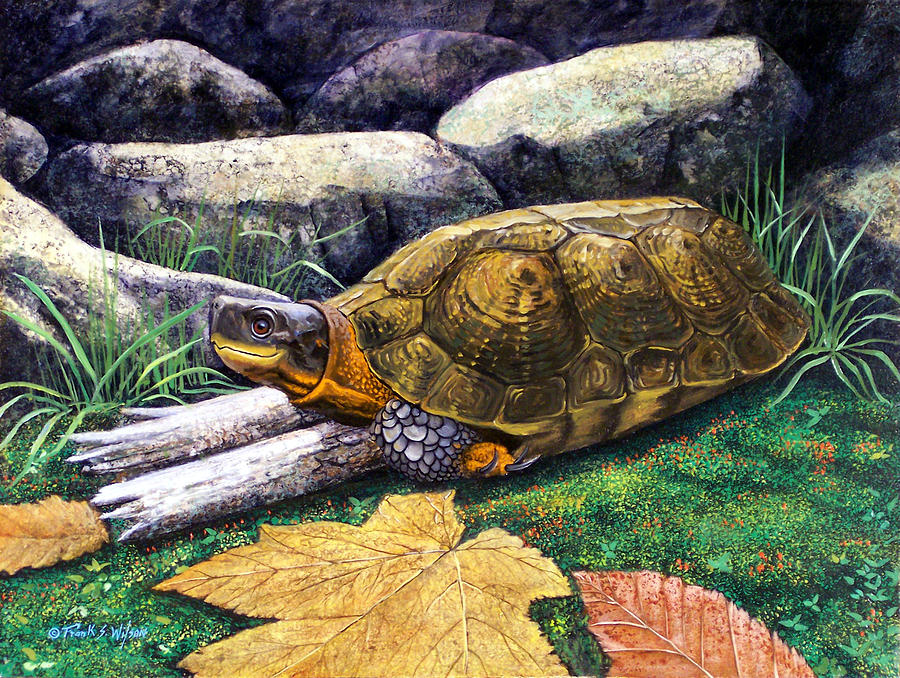 Wood Turtle Painting  - Wood Turtle Fine Art Print