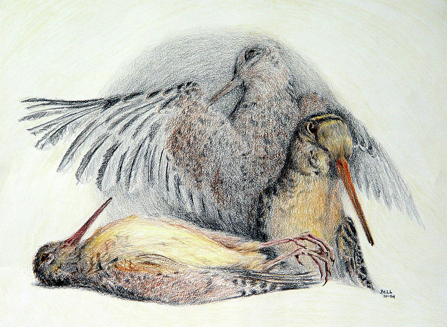Woodcock Drawing