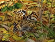 Woodcock Painting - Woodcock Mating Season by David Keene