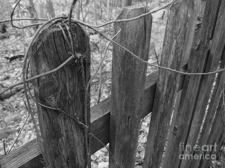 Wooden Fence Photograph  - Wooden Fence Fine Art Print