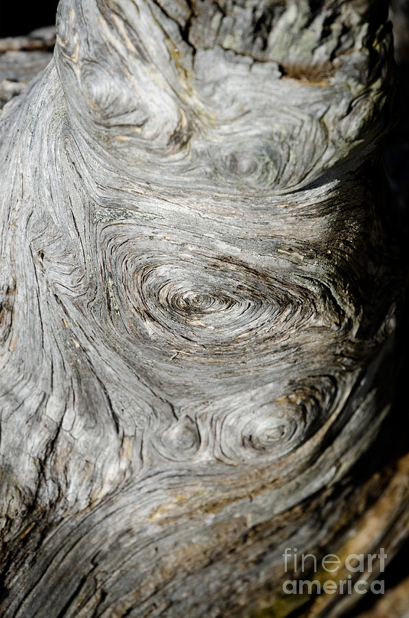 Abstract Photograph - Wooden Fingerprint Eddies In The Grain Of An Old Log Like Whorls On A Finger by Andy Smy