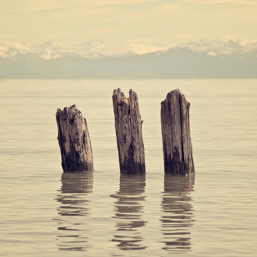 Wooden Piles Photograph