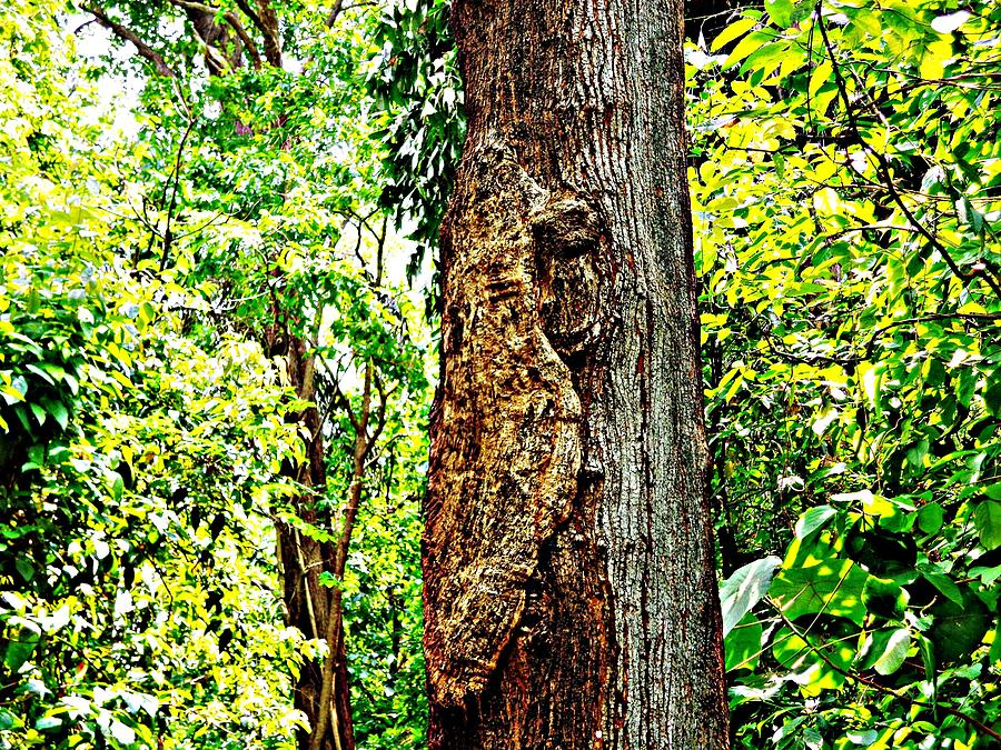 Modern Art Photograph - Woodpecker Tree by Piety Dsilva