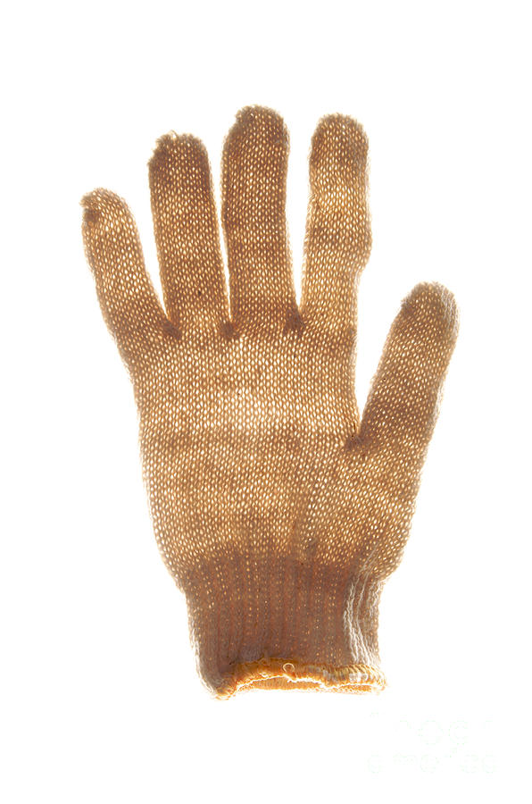 Woolen Glove Photograph