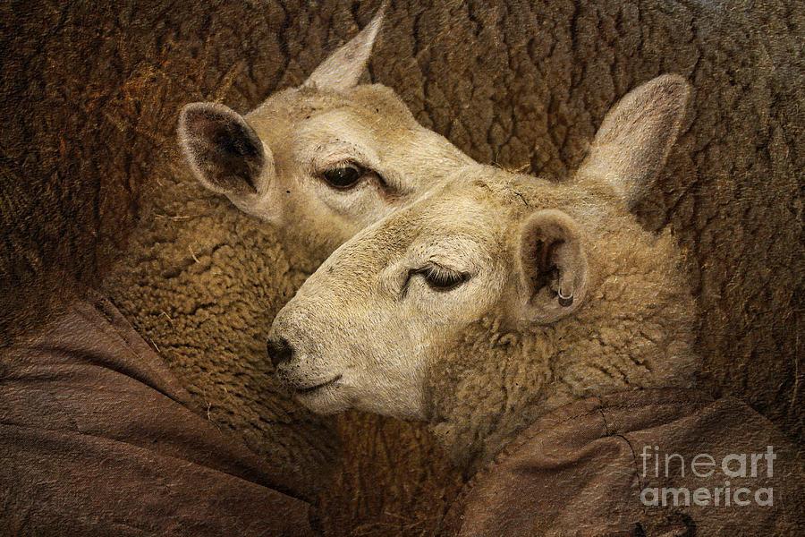 Woolies Photograph