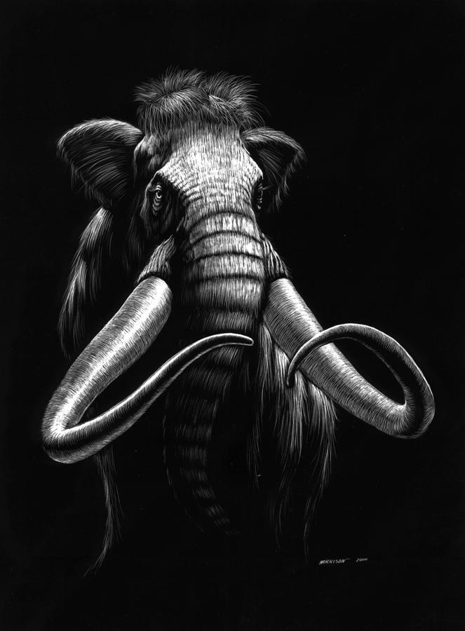 Woolly Mammoth Drawing  - Woolly Mammoth Fine Art Print