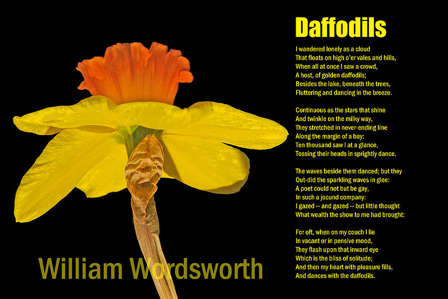 daffoldils william wordsworth Daffodils showing top 8 worksheets in the category - daffodils some of the worksheets displayed are understanding poetry, unit 1 wordsworth the daffodils, teaching in the gardens and growing the future, 18 teachers guide daffodil spring, 3 teachers guide the mighty mighty daffodils, the daffodils by william wordsworth, activity one.
