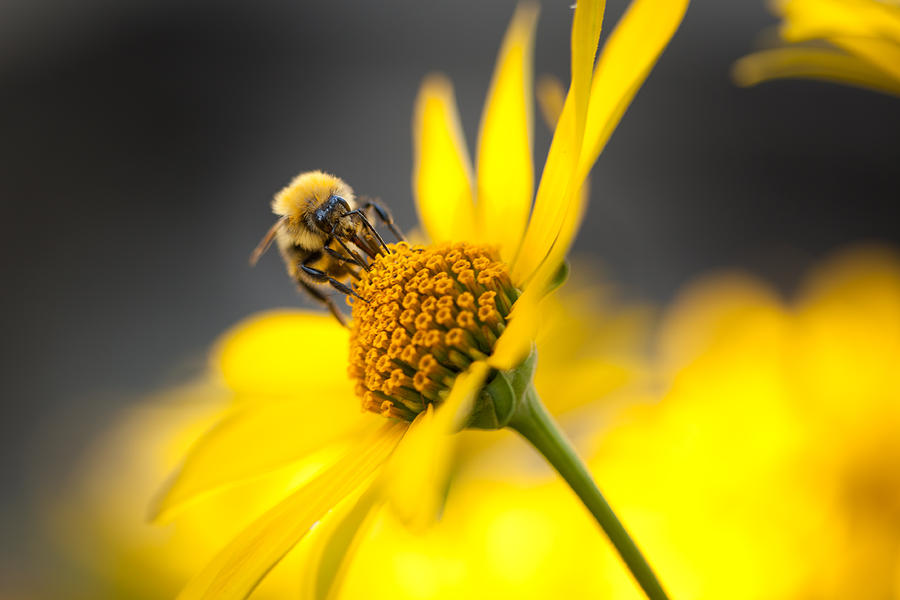 Working Bee Photograph
