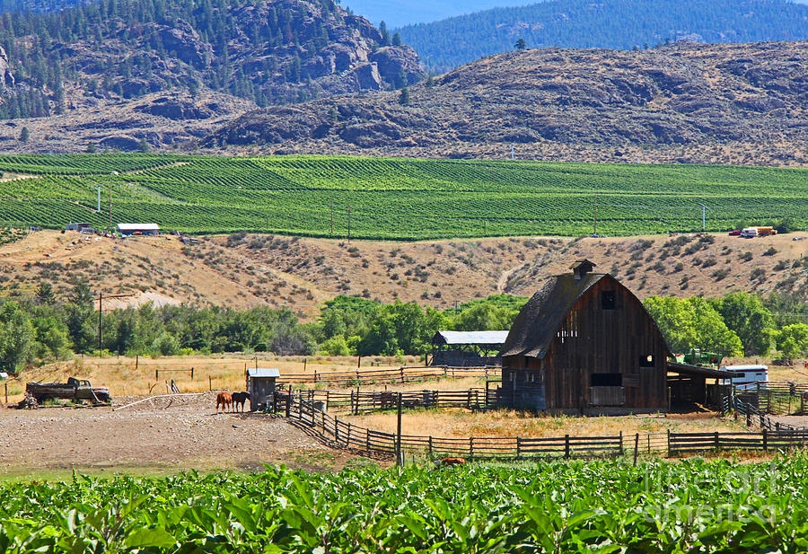 Farm Photograph - Working Farm by Nancy Harrison