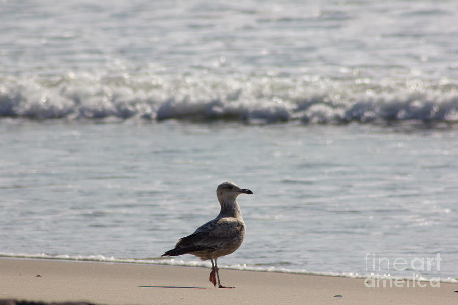 Wounded Seagull 3 Hurt Standing On One Leg Beach Photograph Art Seascape Bird Birds Beaches Sea Pics Photograph