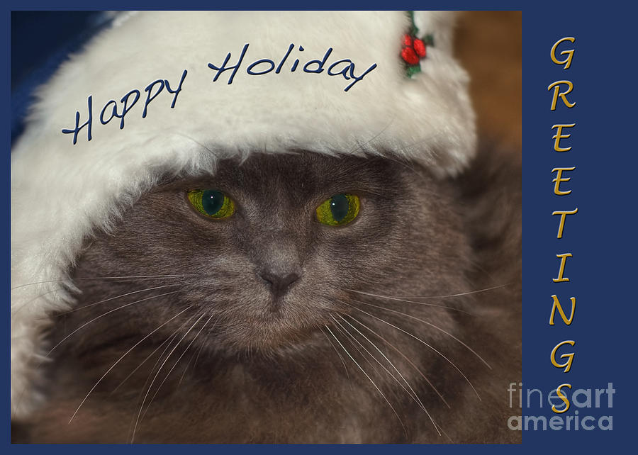 Cat Photograph - Yankee Cat by Joann Vitali