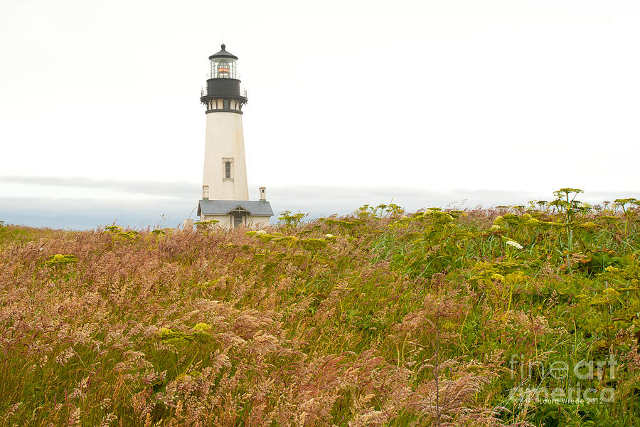 Yaquina Head Lighthouse In Oregon Photograph  - Yaquina Head Lighthouse In Oregon Fine Art Print