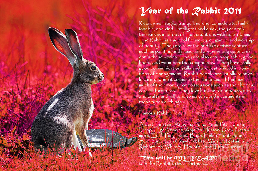 Year Of The Rabbit 2011 . Red Photograph