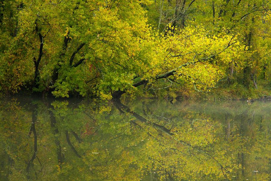 Autumn Photograph - Yellow Autumn by Karol Livote