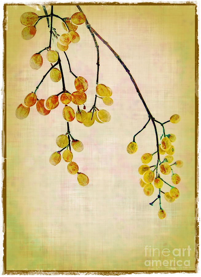 Yellow Berries Photograph  - Yellow Berries Fine Art Print
