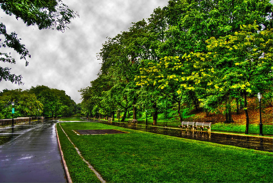 Yellow Blossom In Riverside Park Photograph  - Yellow Blossom In Riverside Park Fine Art Print