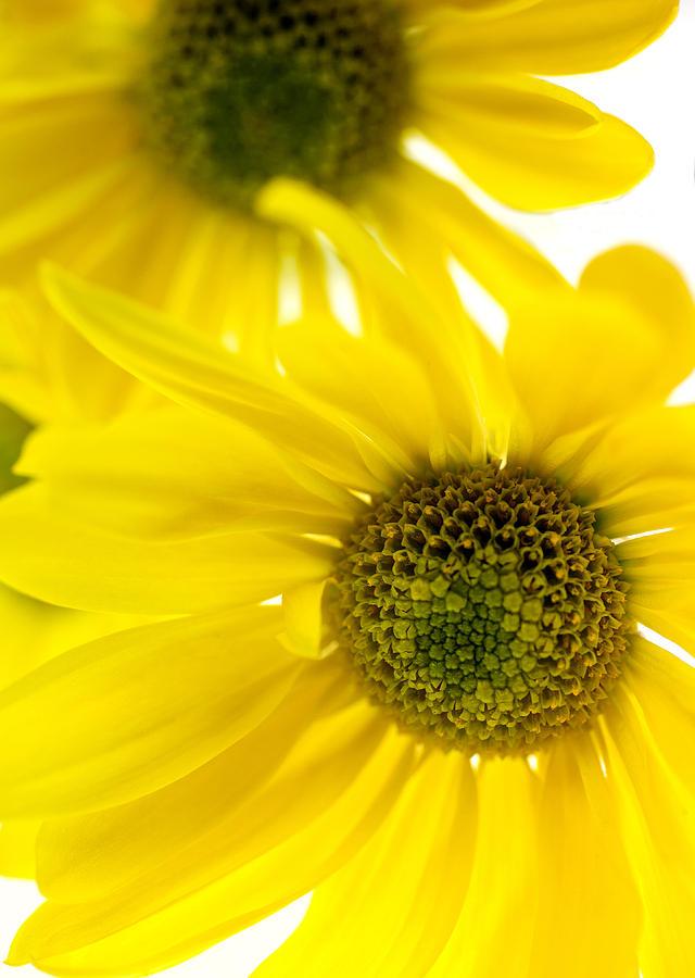 Yellow Bright Yellow Photograph