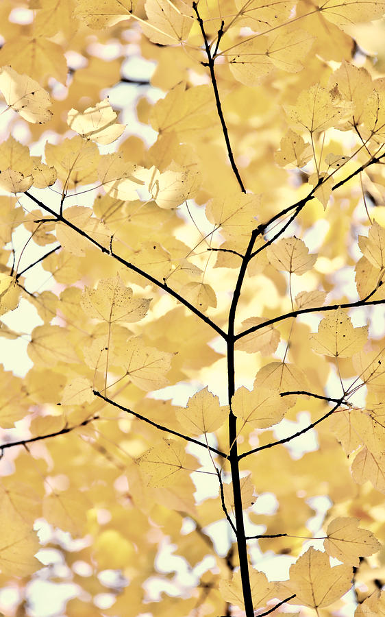 Leaf Photograph - Yellow Brown Leaves Melody by Jennie Marie Schell