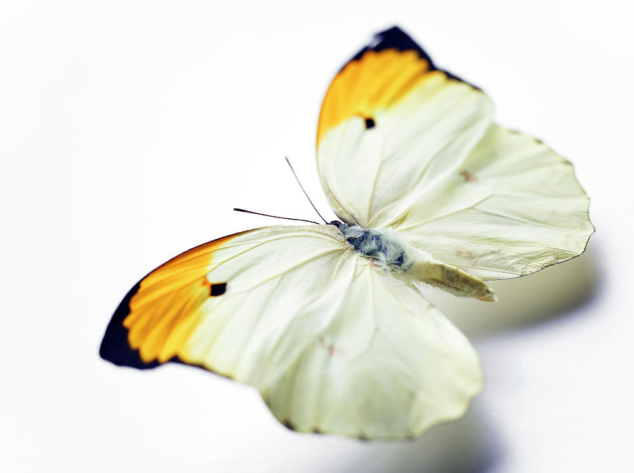 yellow butterfly background wwwimgkidcom the image