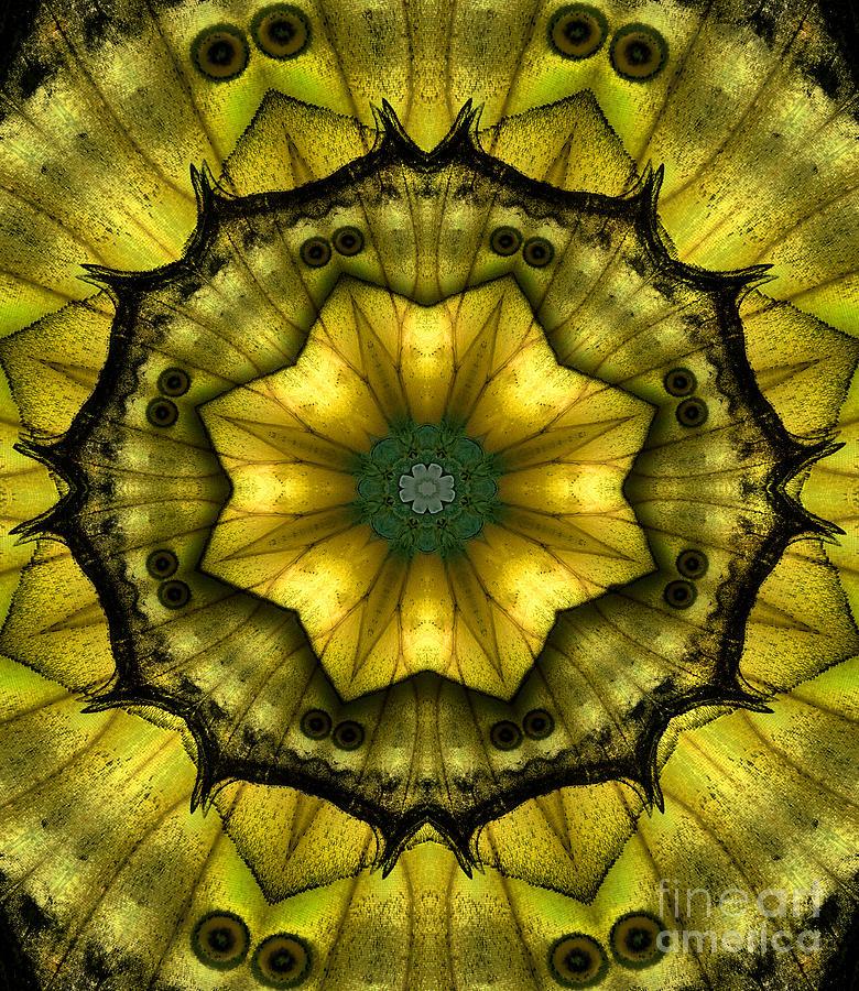 Butterfly Photograph - Yellow Butterfly Wing Kaleidoscope Mandala by Janeen Wassink Searles