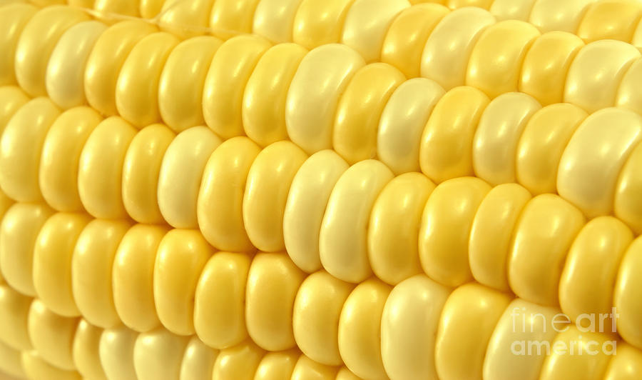 Yellow Corn Macro Photograph  - Yellow Corn Macro Fine Art Print
