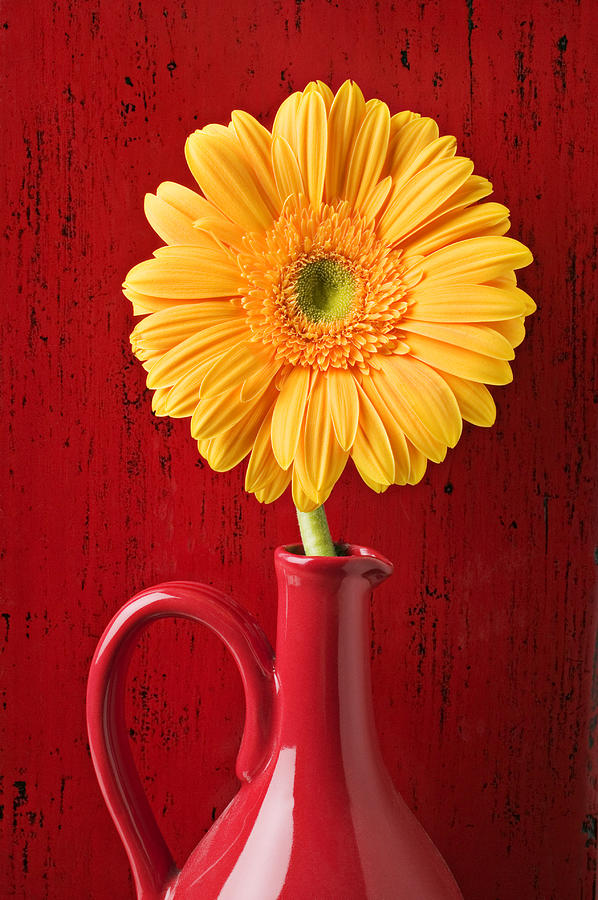 Yellow Daisy In Red Vase Photograph