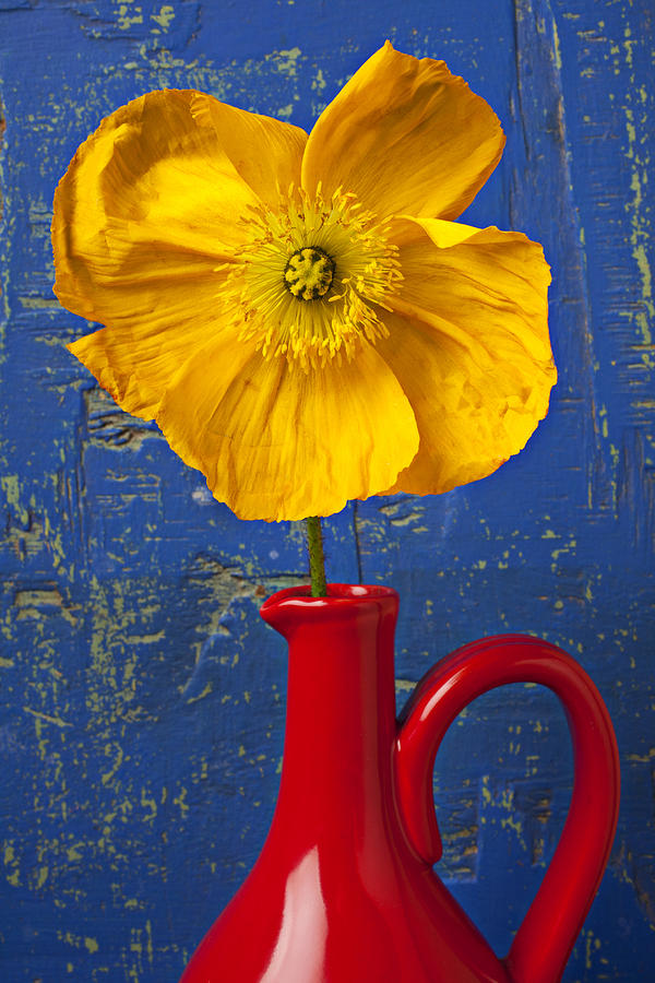 Yellow Iceland Poppy Red Pitcher Photograph  - Yellow Iceland Poppy Red Pitcher Fine Art Print