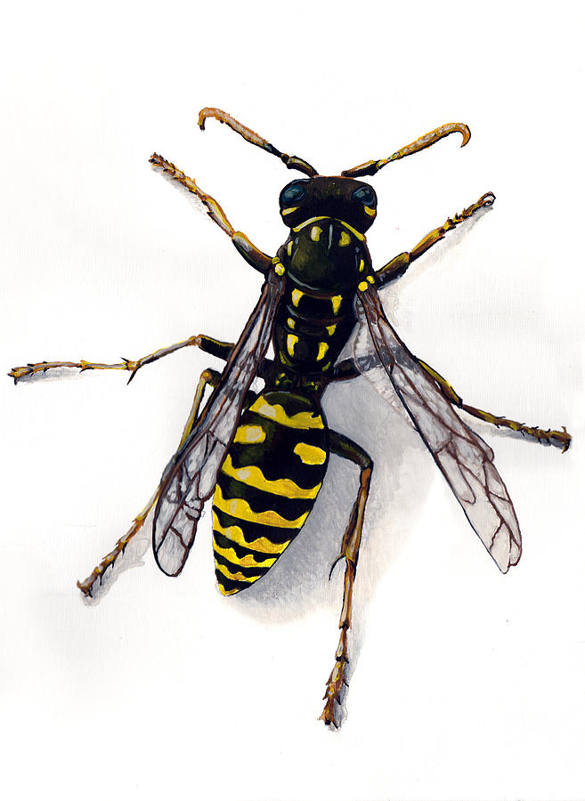Yellow Jacket Painting