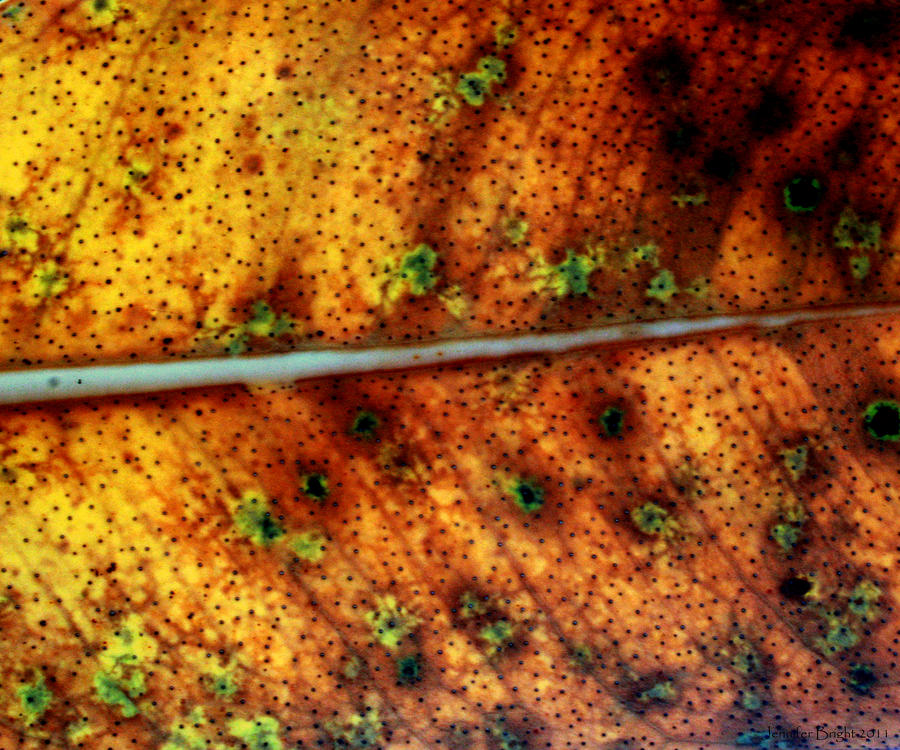 Yellow Leaf With Green Spots And Black Dots Photograph