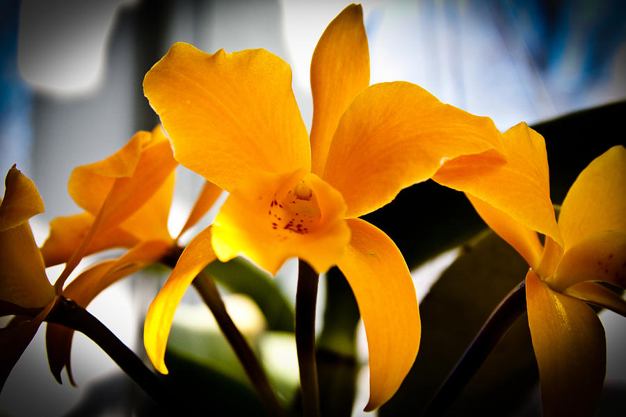 Floral Photograph - Yellow Magic by David Patterson