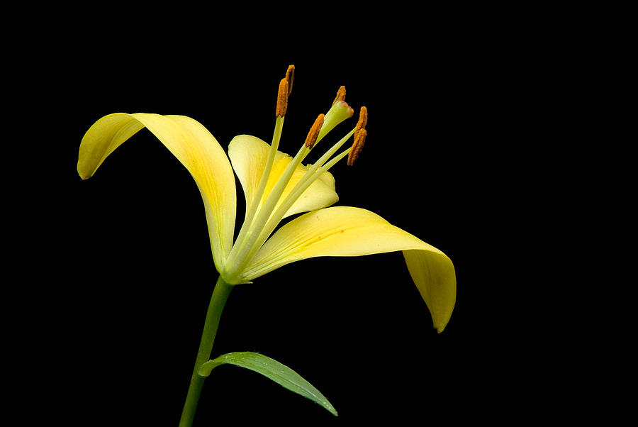 Yellow On Black Photograph  - Yellow On Black Fine Art Print