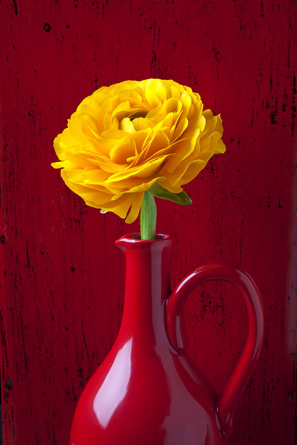 Yellow Ranunculus In Red Pitcher Photograph  - Yellow Ranunculus In Red Pitcher Fine Art Print
