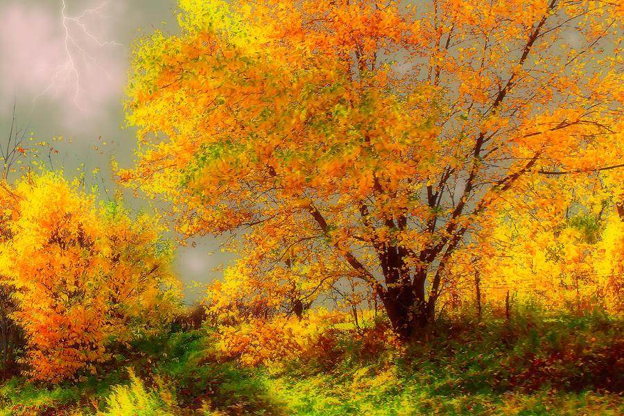 Yellow Tree Photograph  - Yellow Tree Fine Art Print