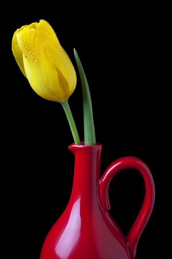 Yellow Tulip In Red Pitcher Photograph