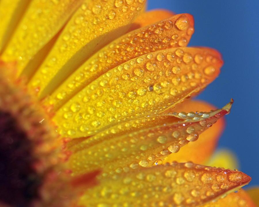 Yellow Wild Flower Photograph