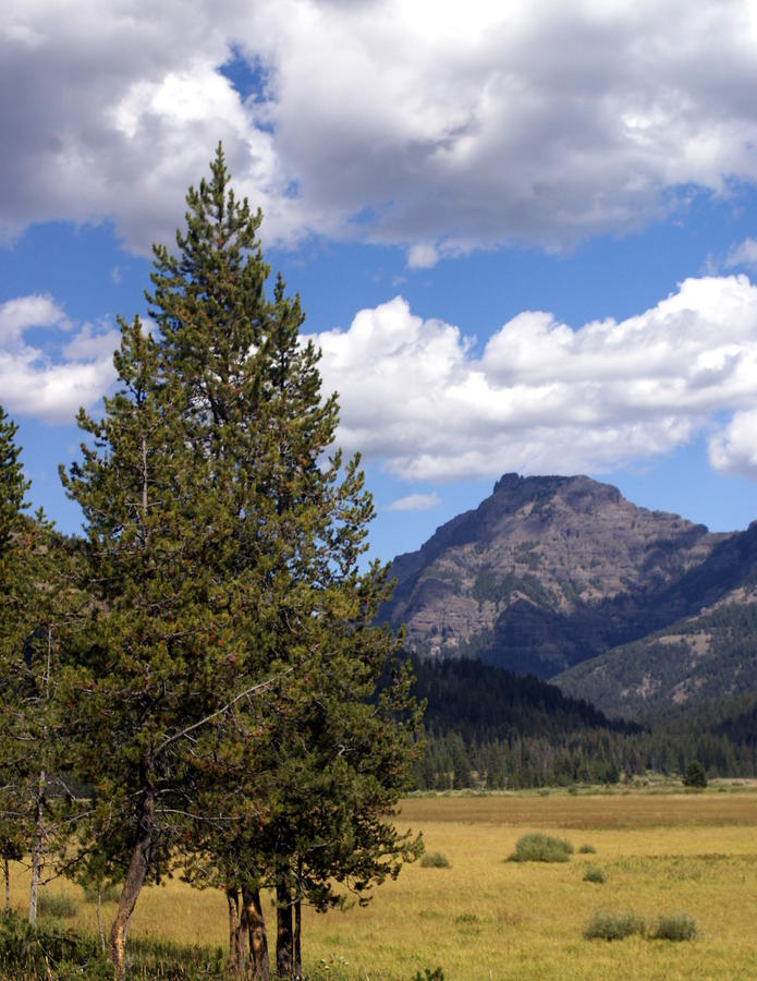 Yellowstone Landscape Photograph