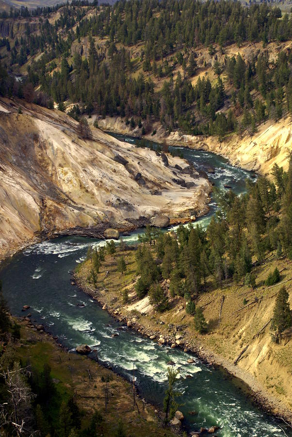 Yellowstone River Canyon Photograph  - Yellowstone River Canyon Fine Art Print