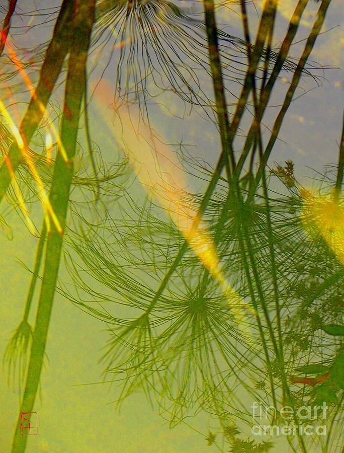 Yin Photograph
